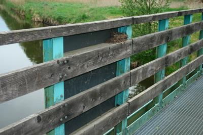 Nest Brücke
